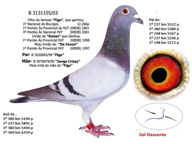 3131155-03-b