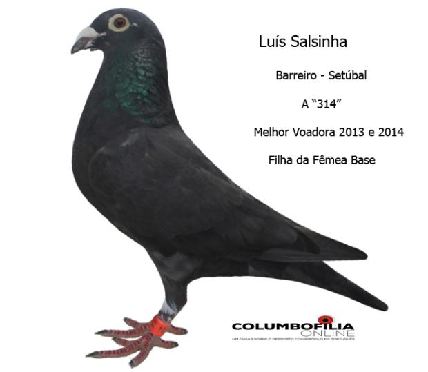 314 salsinha