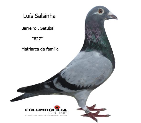 827 salsinha