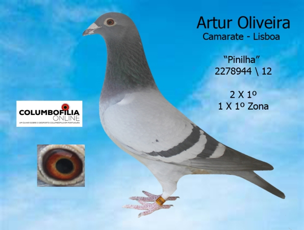 pinilha artur oliveira
