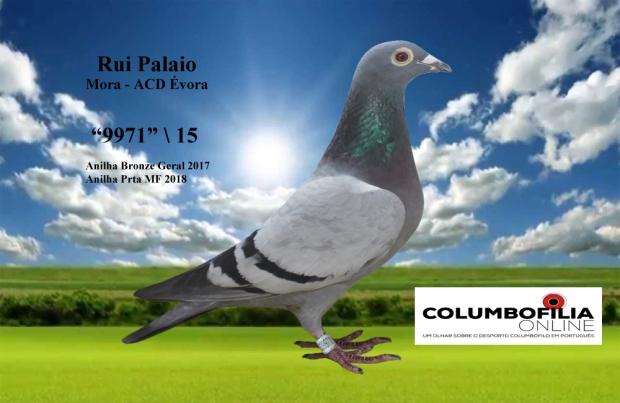 9971 palaio