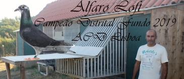 destaque alfaro loft