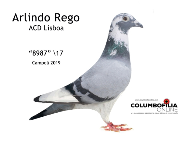 campea arlindo Rego 2019 co