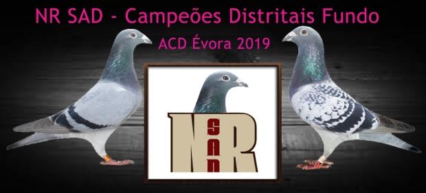 destaque nrsad 2019