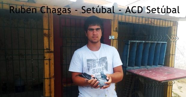 destaque Ruben Chagas