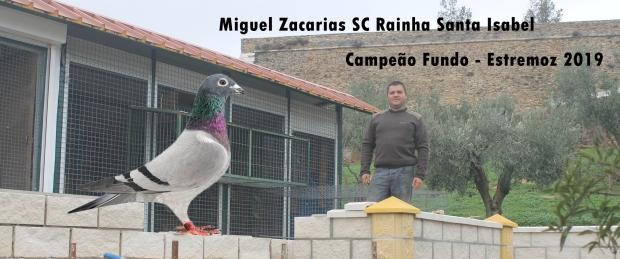 destaque Miguel Zacarias
