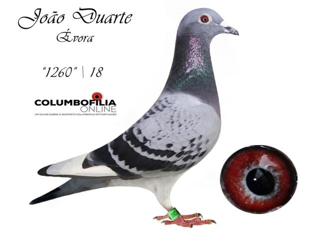 1260 joao Durarte