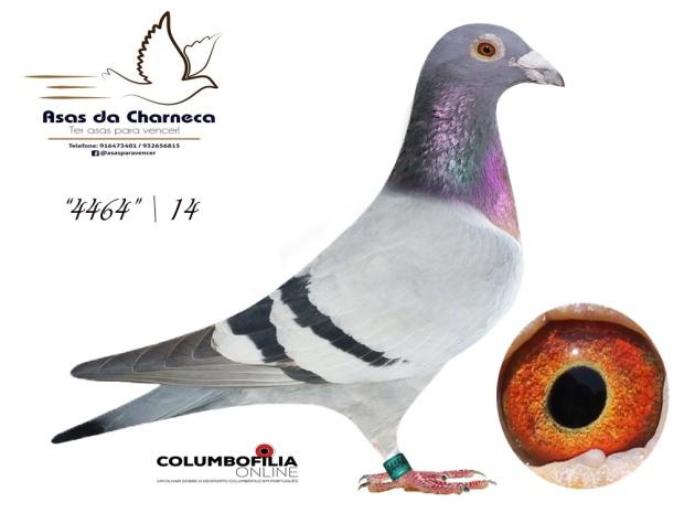 4464 asas charneca