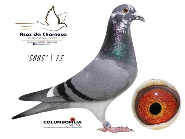 5885 asas charneca