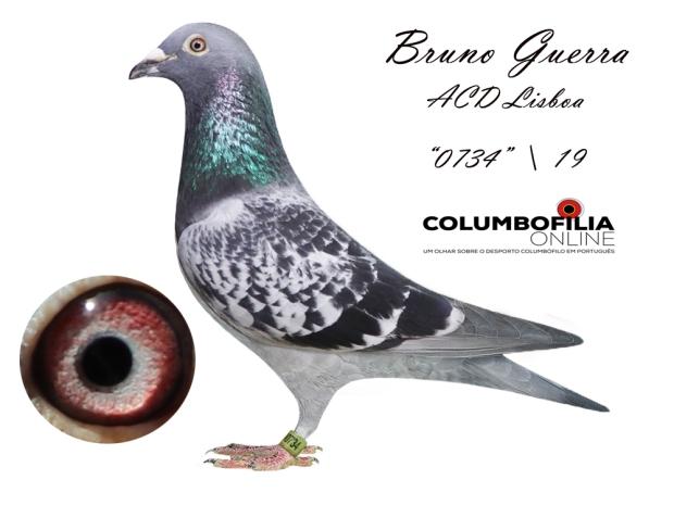 0744 Bruno Guerra