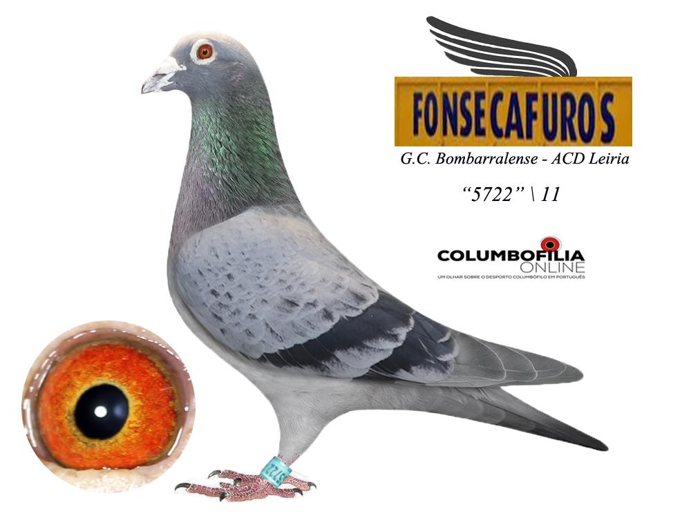 5722-fonsecafuros